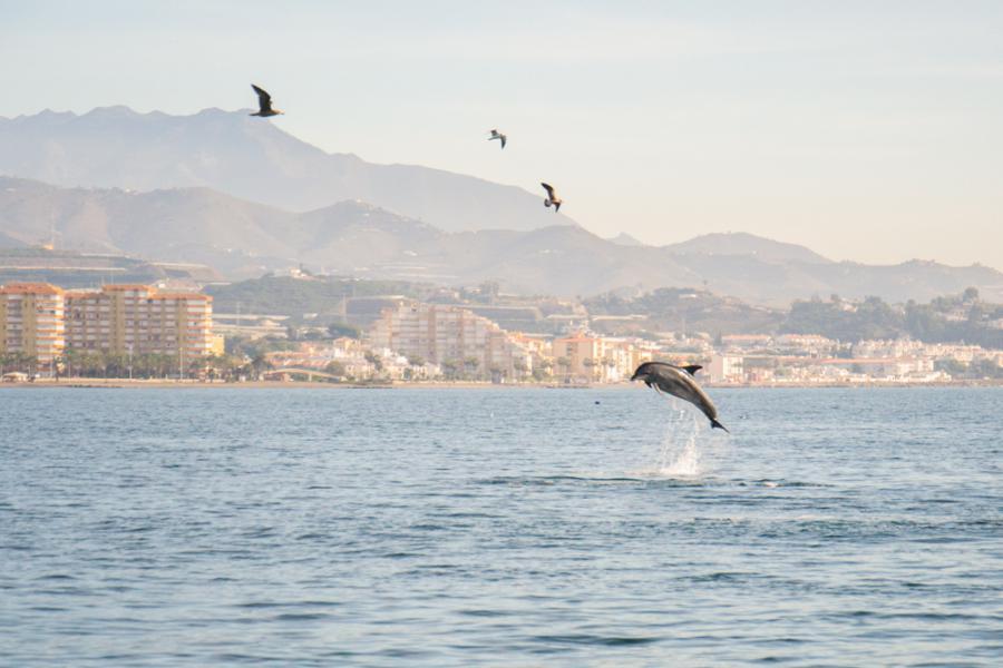 Boat Cruises Caleta de Velez